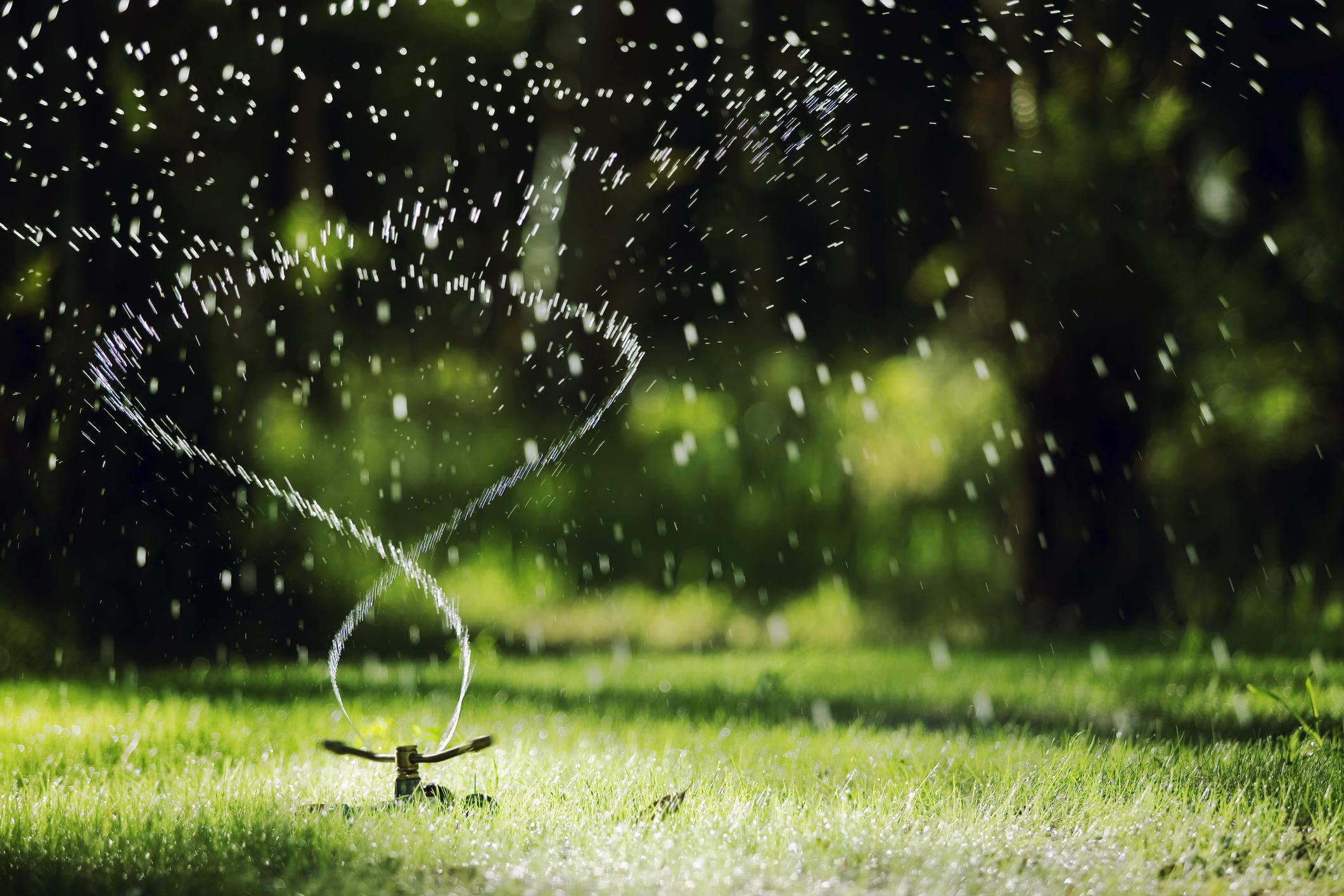 Podlewanie trawy. Kiedy najlepiej to robić?